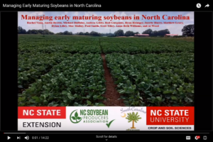 Cover photo for Managing Early Maturing Soybeans in North Carolina